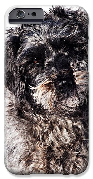 Sammy IPhone Case by Larry Ricker