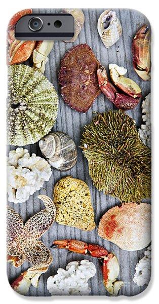 Sea Treasures IPhone Case by Elena Elisseeva
