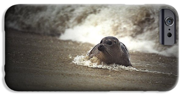 Seal In The Surf At Lajolla Beach No.004 IPhone Case by Randall Nyhof