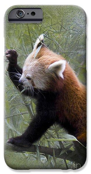 Small Panda IPhone Case by Heiko Koehrer-Wagner
