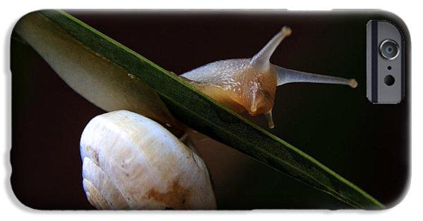Snail IPhone Case by Stelios Kleanthous
