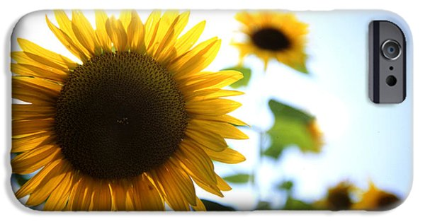 Sunflowers IPhone Case by Les Cunliffe