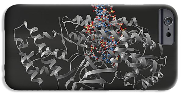 Telomerase Molecule Bound To Dna IPhone Case by Laguna Design