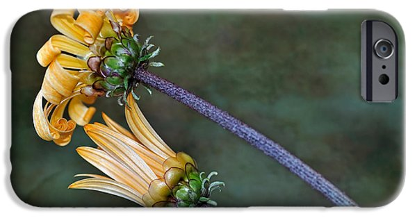 Unfurling Daisy IPhone Case by Kaye Menner