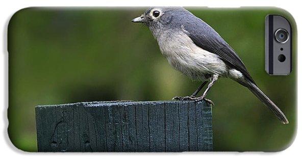 White-eyed Slaty Flycatcher IPhone 6s Case by Tony Beck