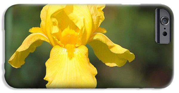 Yellow Iris IPhone 6s Case by Jai Johnson