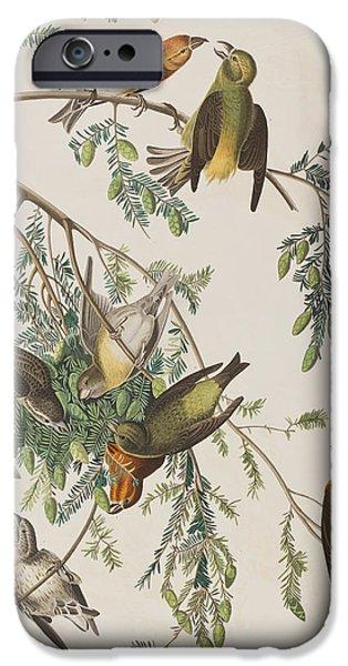 American Crossbill IPhone 6s Case by John James Audubon