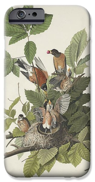 American Robin IPhone Case by John James Audubon