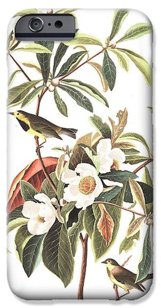 Bachman's Warbler  IPhone 6s Case by John James Audubon
