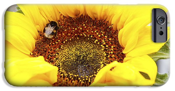 Bee IPhone Case by Les Cunliffe