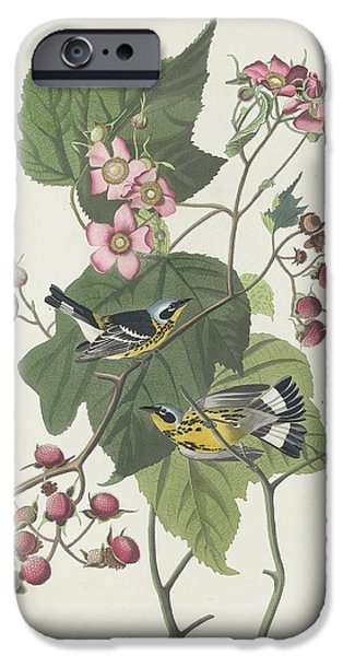 Black And Yellow Warbler IPhone 6s Case by John James Audubon