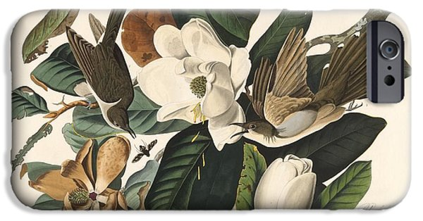 Black-billed Cuckoo IPhone 6s Case by John James Audubon