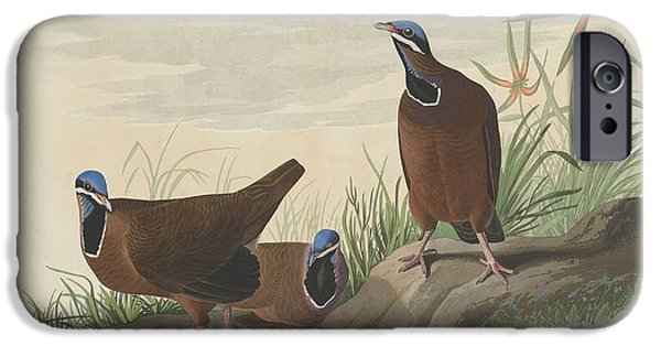 Blue-headed Pigeon IPhone 6s Case by John James Audubon