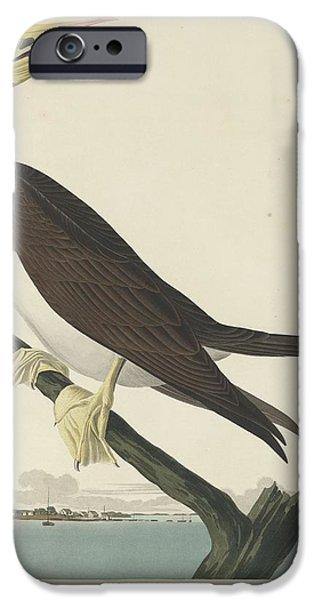 Booby Gannet IPhone 6s Case by John James Audubon