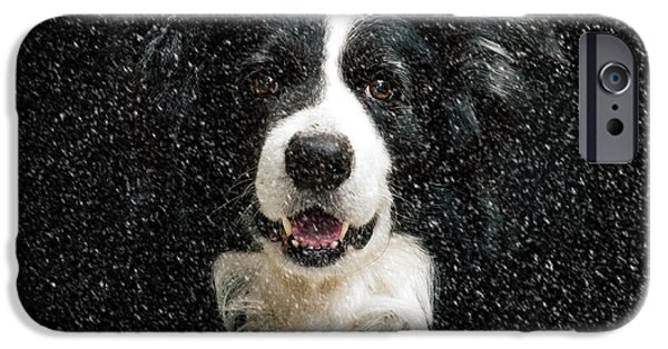 Border Collie IPhone Case by Stephen Smith