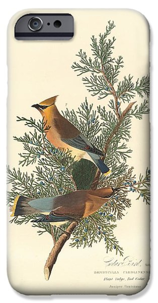 Cedar Bird IPhone Case by John James Audubon