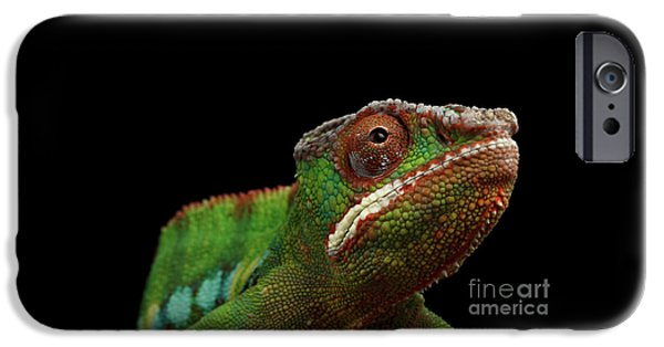Closeup Head Of Panther Chameleon, Reptile In Profile View Isolated On Black Background IPhone 6s Case by Sergey Taran