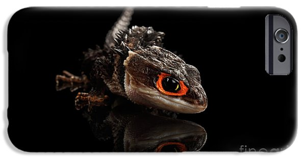Closeup Red-eyed Crocodile Skink, Tribolonotus Gracilis, Isolated On Black Background IPhone 6s Case by Sergey Taran