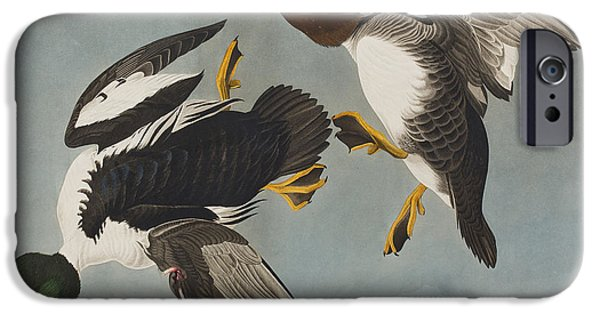 Golden-eye Duck  IPhone Case by John James Audubon