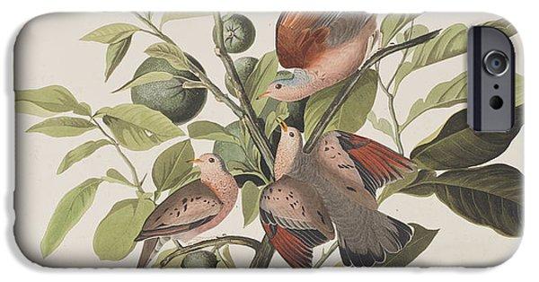Ground Dove IPhone 6s Case by John James Audubon