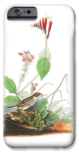 Henslow's Bunting  IPhone 6s Case by John James Audubon