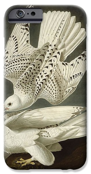Iceland Or Jer Falcon IPhone 6s Case by John James Audubon
