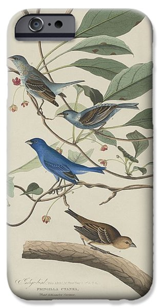 Indigo Bird IPhone Case by John James Audubon