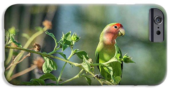 Lovely Little Lovebird  IPhone 6s Case by Saija Lehtonen