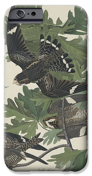 Night Hawk IPhone 6s Case by John James Audubon