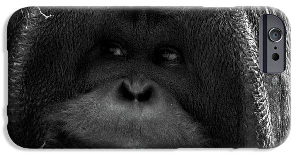 Orangutan IPhone 6s Case by Martin Newman