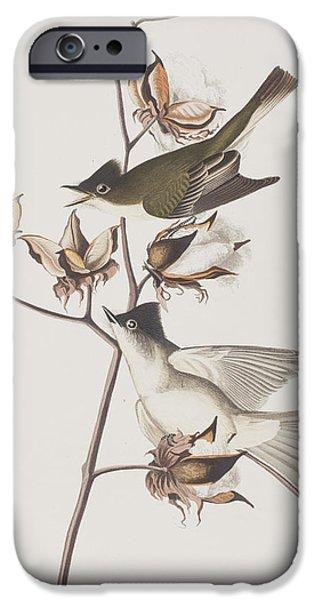 Pewit Flycatcher IPhone 6s Case by John James Audubon