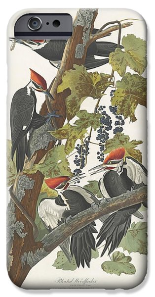 Pileated Woodpecker IPhone Case by John James Audubon