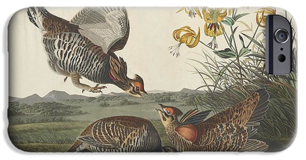 Pinnated Grouse IPhone 6s Case by John James Audubon