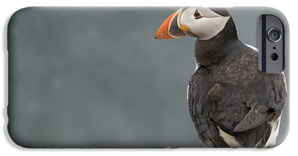 Puffin IPhone Case by Ian Hufton