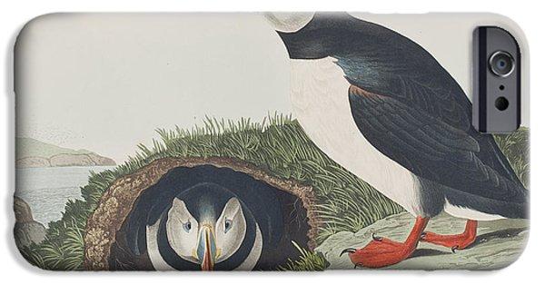 Puffin IPhone 6s Case by John James Audubon