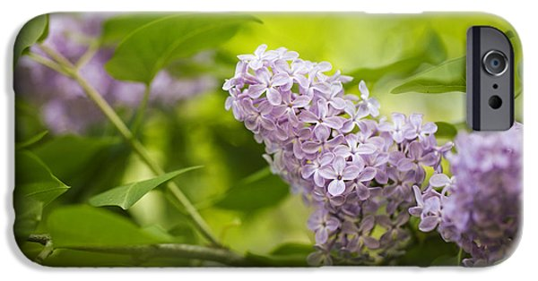Purple Lilac IPhone Case by Nailia Schwarz