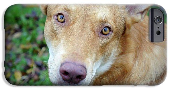 Red Dog  IPhone Case by Oleg Shagapov