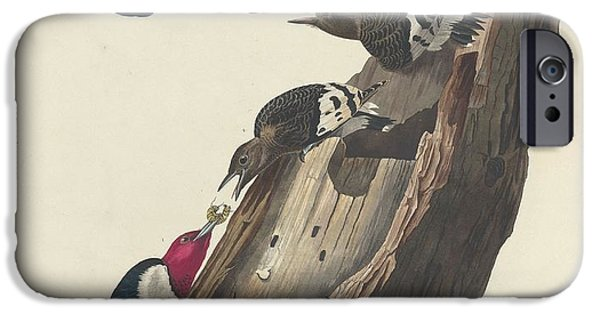 Red-headed Woodpecker IPhone Case by John James Audubon