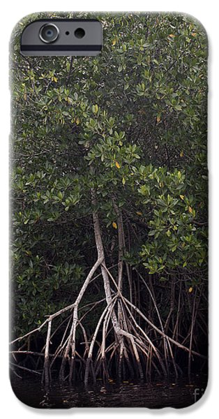 Red Mangrove Swamp, Florida IPhone Case by Scott Camazine