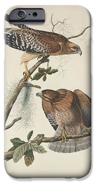 Red Shouldered Hawk IPhone 6s Case by John James Audubon