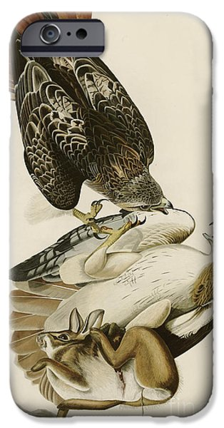 Red Tailed Hawk IPhone Case by John James Audubon
