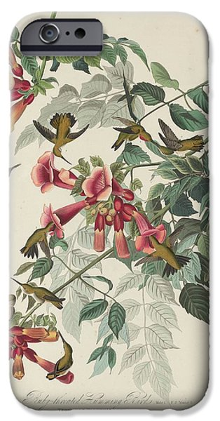 Ruby-throated Hummingbird IPhone Case by John James Audubon