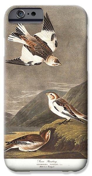 Snow Bunting IPhone 6s Case by John James Audubon