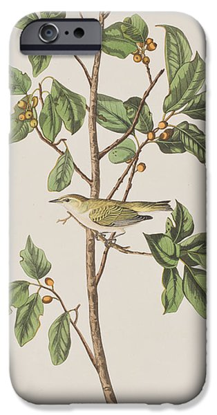 Tennessee Warbler IPhone 6s Case by John James Audubon