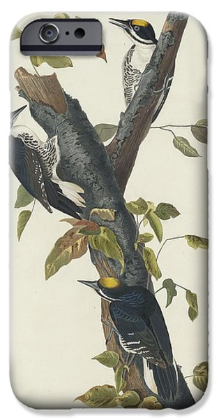 Three-toed Woodpecker IPhone Case by John James Audubon