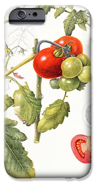 Tomatoes IPhone 6s Case by Margaret Ann Eden