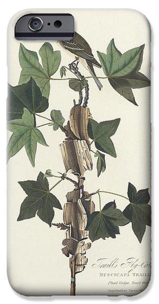 Traill's Flycatcher IPhone 6s Case by John James Audubon