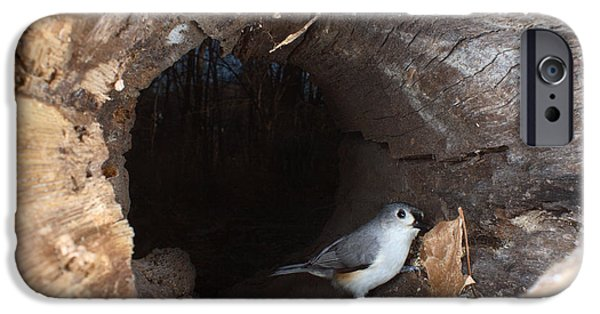 Tufted Titmouse In A Log IPhone 6s Case by Ted Kinsman