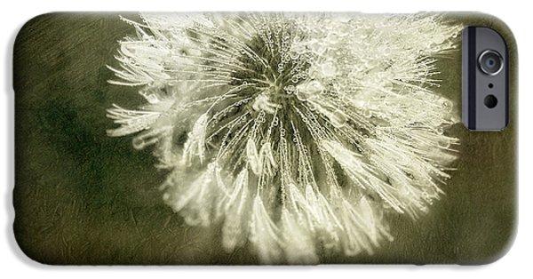 Water Drops On Dandelion Flower IPhone Case by Scott Norris
