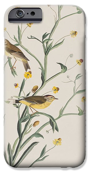 Yellow Red-poll Warbler IPhone 6s Case by John James Audubon